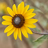 September sunflower