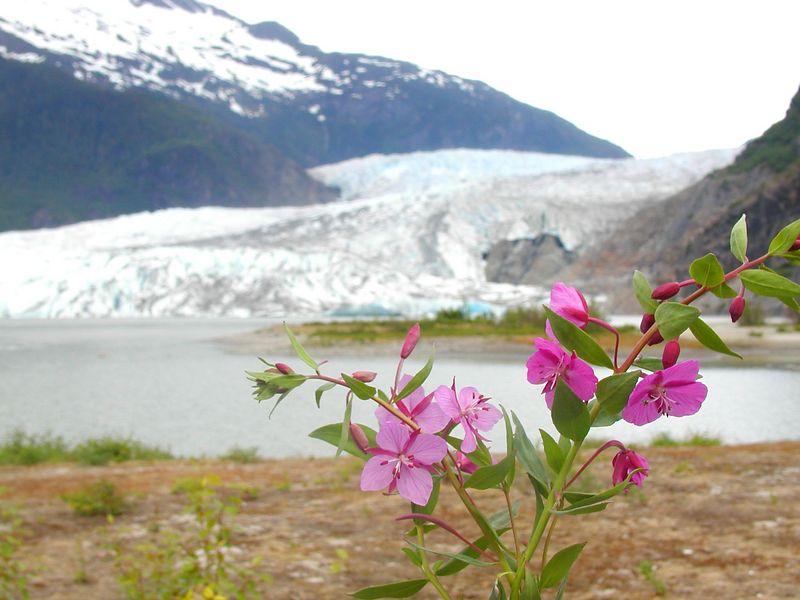 Alaska - June 2004 (Mendenhall Glacier)