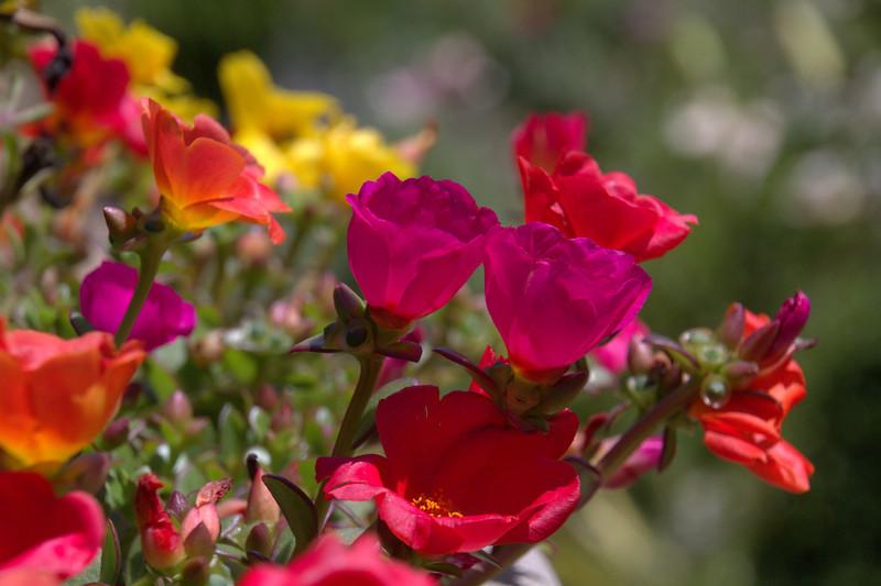 Wildflowers At Wegerzyn