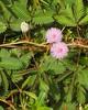 Grenada, May 30, 2005