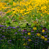 Wildflowers In The Country