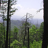 View #1 from the trail looking toward Chilhowee Lake through numerous dead pine trees.