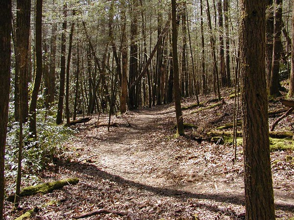 <b>Trail heading down into Whiteoak Sinks leads through a great smelling, pretty pine forest. <BR> It is a peaceful place, but during wildflower season it can be more like party.<BR> I had the place to myself today. I sneaked in a quick hike before going to work at night.