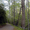Little Brier Gap Trail heading from the school to the Walker Sisters.<br /> GSMNP May 08
