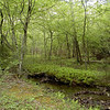 One of my all time favorite vistas along this trail.<br /> Lush and green. Little Brier Gap Trail.<br /> GSMNP May 08