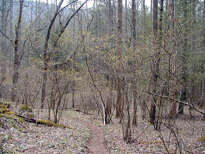 The path leads through trees showing the faintest pea green buds. This is one of my favorite colors of all time.. Spring green! White Oak Sinks, GSMNP, TN 2008