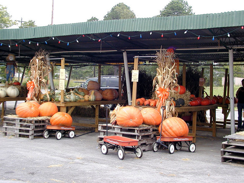Etowah Garden Center all ready for Fall!<br /> We stopped here and I purchased a Cinderella pumpkin.<br /> I will save the seeds for my heirloom garden next year!