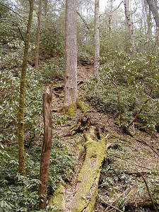 "The ""shortcut"" out of Whiteoak Sinks. If you climb this steep bank hanging onto roots and limbs...... it cuts off a considerable portion of the trip.  It is right alongside the cave and you can get a good view down into the pit! GSMNP TN 2008"