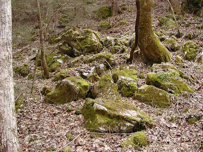 These factured rocks covered with moss are typical of what is found in limestone sinks.  The moisture and mineral content is conducive to wildflower proliferation.  Flowers tend to bloom first at lower elevations moving higher up about 100-200 ft per day.  The White Oak Sinks is at one of the lowest elevations in the park making it a sheltered location. It is also a relatively flat area surrounded by mountains all all sides. White Oak Sinks, GSMNP, TN 2008