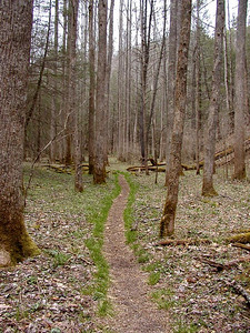 Green grass edging the trail thru the Sinks. White Oak Sinks, GSMNP, TN 2008