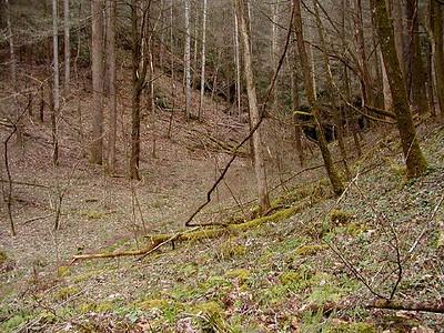 Trail leading away toward the waterfall White Oak Sinks, GSMNP, TN 2008