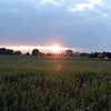 Sunset over the cornfield at Maple Lane Farm. We made it out in plenty of time. It was pretty easy.  Kenny liked it so much he wants us to go back again. We might, but I think it would be more fun to go visit another,different one.