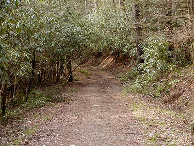 Sunday I hiked the lower 1.2 miles of Bote Mountain Trail.  I realized I hadn't hiked that remnant of the trail in completing my 900 Miler. It is not a very good Spring wildflower trail, but it is pretty and I had it to myself! It is across the road from Schoolhouse Gap parking area GSMNP TN 2008