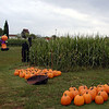 All those pumpkins are ready to sell!