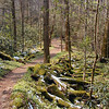 Porters Creek Trail continues on green and mossy and frosted with melting snow.<br /> It snowed the day before.<br /> GSMNP TN 4/09