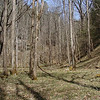 The valley floor of White Oak Sinks looking toward the cliffs and Scott Mtn manway goes off to the right beyond those trees to join back up with Schoolhouse Gap Trail near a residence.<br /> GSMNP TN 3/09