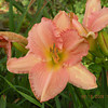 Atlanta Debutante<br /> The Lily Barn Townsend, TN 6/16/09