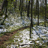 Snow along Porters Creek still not melted. <br /> GSMNP TN 4/09