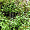 Close up of the green cliff on Connelly's Creek Road.<br /> You can see the water dripping amidst the flowers and plants.