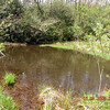Bog Pond had oodles of frogs jumping today. Only saw one dragon fly. Too cold yet probably.