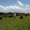 Kenny strolling out for his first view of the bald and the azaleas.