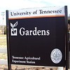 UT Gardens was another new stop this year. Never visited here before, but was jonesing for wildflowers.<br /> Decided to check this out at the recommendation of my husband. He says it is prettiest in Summer.<br /> Located on Neyland Drive in Knoxville, TN  3/09