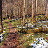 One of my favorite sections of Porters Creek Trail with the late afternoon sun shining down and melting the snow from the previous day.  I watched the flowers perk up as the snow melted!<br /> GSMNP TN 4/09