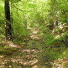 Green Woods! <br /> Trail past the waterfalls at Tallassee