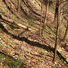 Path to Believer Falls up Rush Branch.<br /> This was an old road that continues up past the waterfall.<br /> GSMNP TN 3/30/09