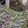 Slopes below Believer Falls were lined in white wake robin trilliums and sweet white trilliums.<br /> GSMNP TN 3/30/09