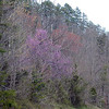 Hazey pinks and reds of red buds and red maples along Foothills Parkway West near Walland.<br /> Blount County, TN 3/09