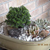 Dish garden I created using my Dwarf Hinoki Cypress from Popes.  <br /> The other plants are inexpensive succulents from Lowes. The one is called baby toes.. the other I don't recall. Sorry.<br /> The rocks I picked up while hiking in the wilderness of western NC. Very Zen.