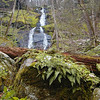 A photo that shows where Fern Branch Falls gets its name.<br /> Porters Creek Trail GSMNP TN 4/09