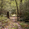 One of my favorite views along this pretty,quiet and little used trail.<br /> Beard Cane Creek Trail<br /> GSMNP TN 4/21/09