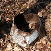This is the third or fourth sign of man's occupation up Rush Branch.  It's another chunk of what I call Pioneer Junk.<br /> Probably an old bucket or wash tub.