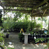 Inviting shady spot and fountain brush arbor<br /> Pope's Garden Center Rockford TN