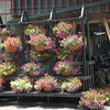 Lots of colorful hanging baskets for sale.