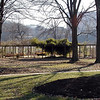 Early Spring at UT Gardens--the arbor<br /> Knoxville TN 3/09