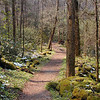 And Porters Creek Trail winds on and on.......... <br /> GSMNP TN 4/09