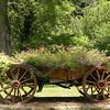 Wagonload of Flowers in Townsend TN 6/16/09