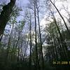 Beautiful forest canopy along Beard Cane Creek Trail under blue skies!