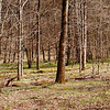 Bottomlands in White Oak Sinks are greening up and in a few weeks they will be awash with the little green umbrellas of mayapples, purple phlox, white violets, and other beautiful things!  When Summer arrives these bottomlands stand tall as a jungle with green plants. <br /> GSMNP TN 3/30/09