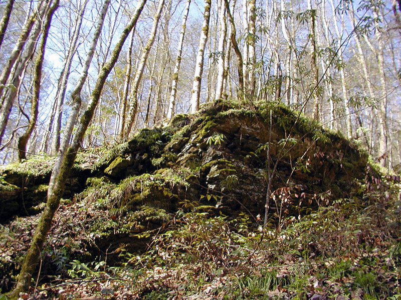 Mossy rocky cliffs above Rush Branch and a forest of small, second growth trees.