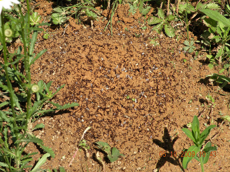 Be careful where you walk or step in the wildflower meadow. <br /> Ant hills are all over the place!