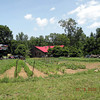 Miss Lily's has built a huge, beautiful vegetable garden!  They use their fresh herbs and veggies in their gourmet cooking!