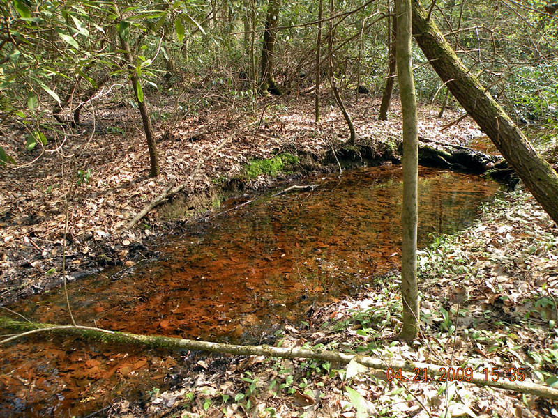 Saw this backwash of tea colored water along Beard Cane Creek Trail.<br /> It is stained with tannins and looks like it may have some iron oxide as well.