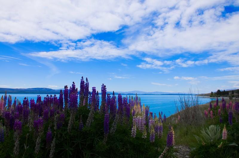 Aoraki National Park<br /> New Zealand, South Island