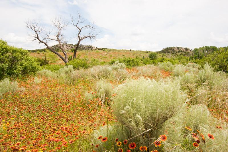 Texas Panhandle Springtime