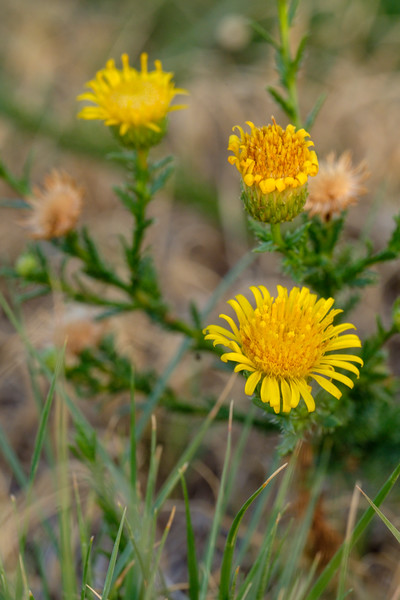 #Wildflowers #macro #stpetersamarillo #texaspanhandle