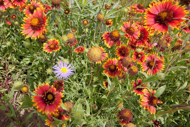 Springtime Wildflower